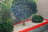 Forma és alaknövények