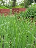 Haszonnövények a kertben, emelt ágyások