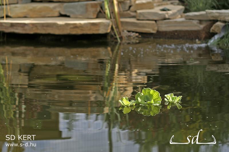 Kerti tó