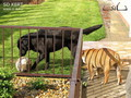 Kutyabarát kertkialakítás