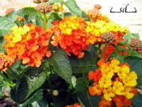Mediterrán kert