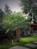 Pálmák a kertben