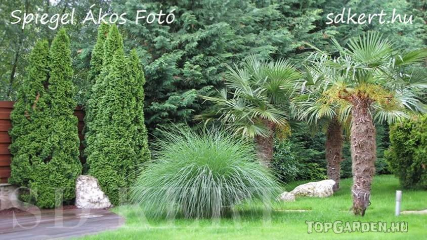 Szubtrópusi hangulatú kert